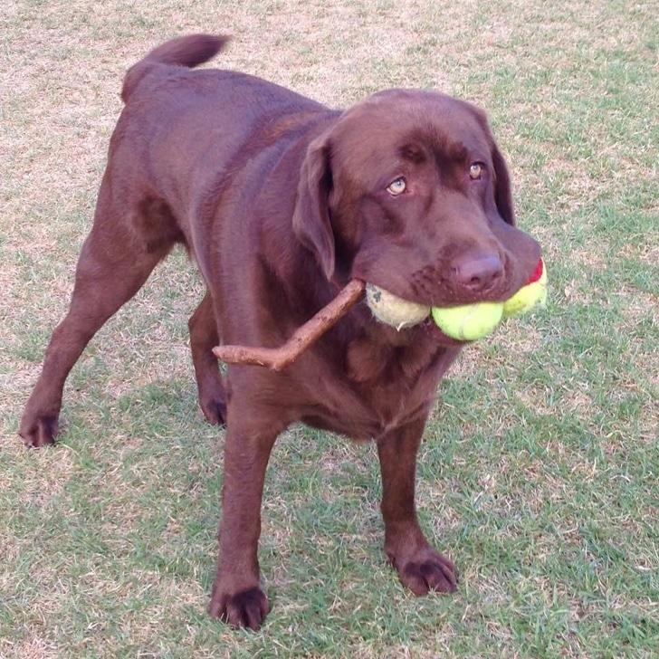 kutyák különböznek az átlagtól2