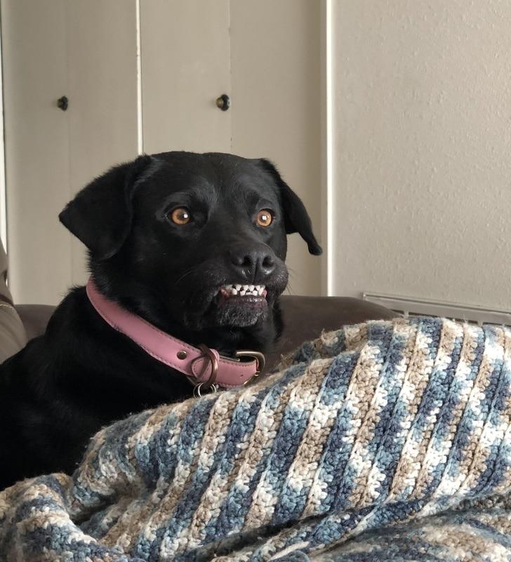 kutyák különböznek az átlagtól4