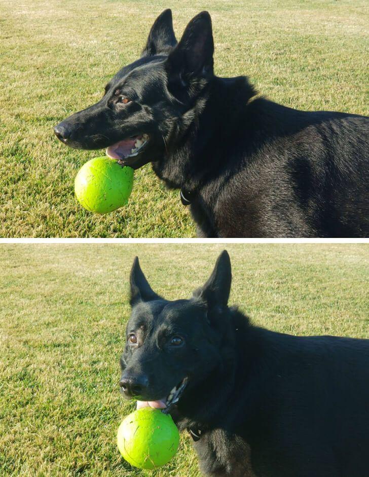 kutyák megnevettetik a gazdit4
