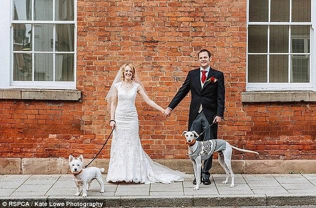 Fiatal pár szeretete mentette meg a világ legsoványabb kóbor kutyáját