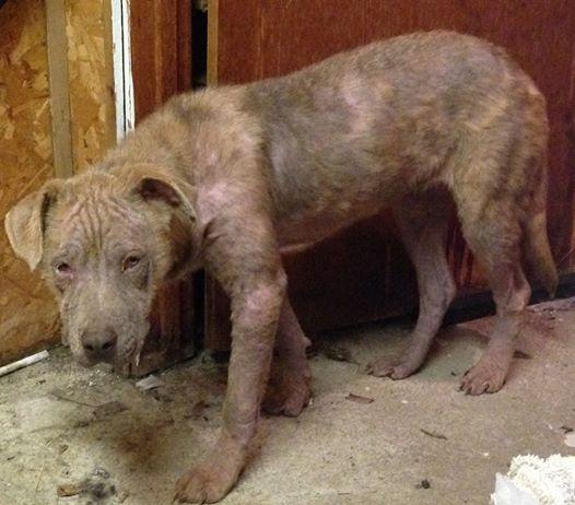 Tündéri családtaggá vált a magára hagyott, beteg kutya