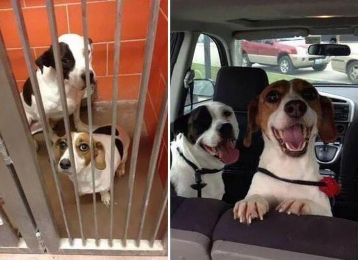 a gondoskodás hogyan változtatja meg a kutyákat
