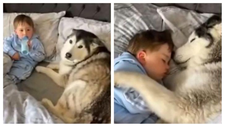 a kutyák a legtisztább szívű lények a világon