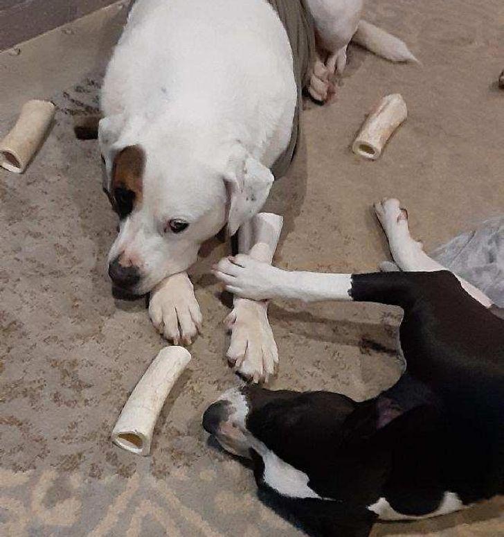 a kutyáknak is van lelkük