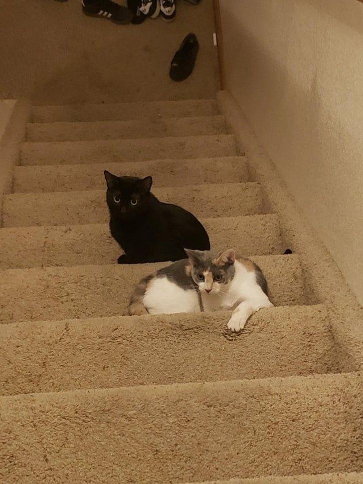 a macskák mellett nem lehet unatkozni