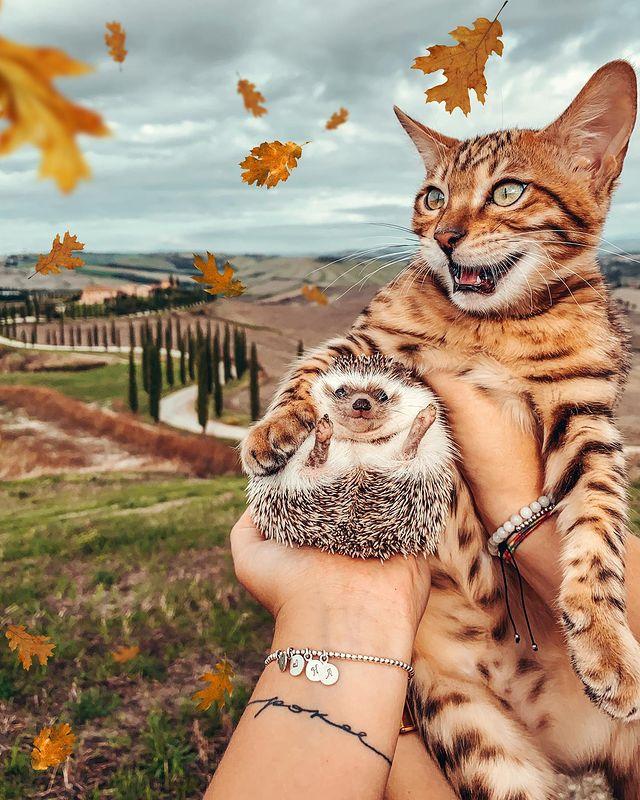 állatok tele vannak szeretettel