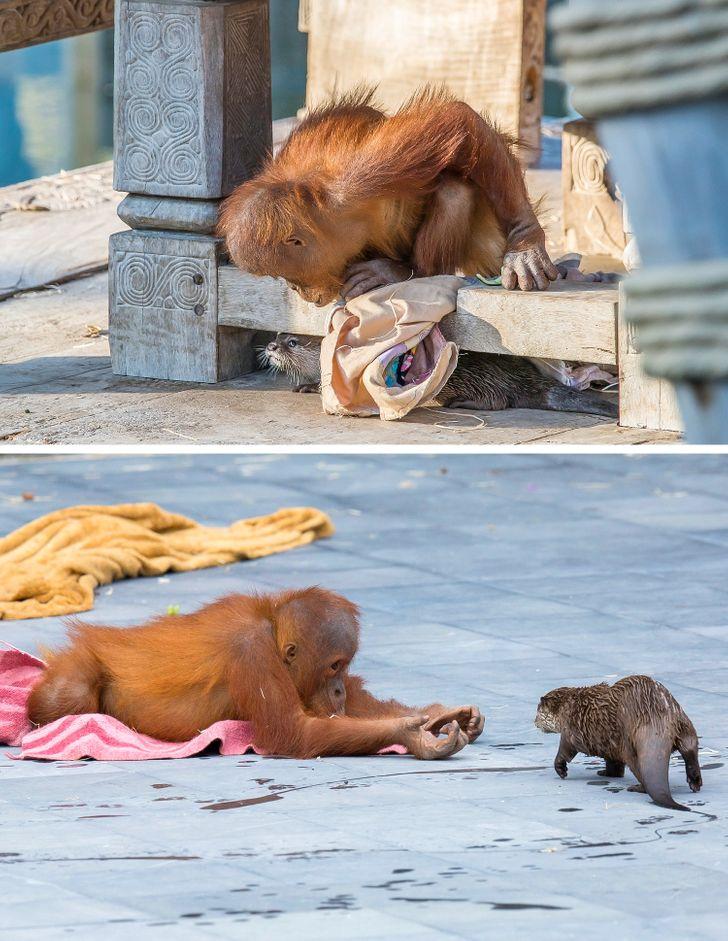 aranyos állatos fotók