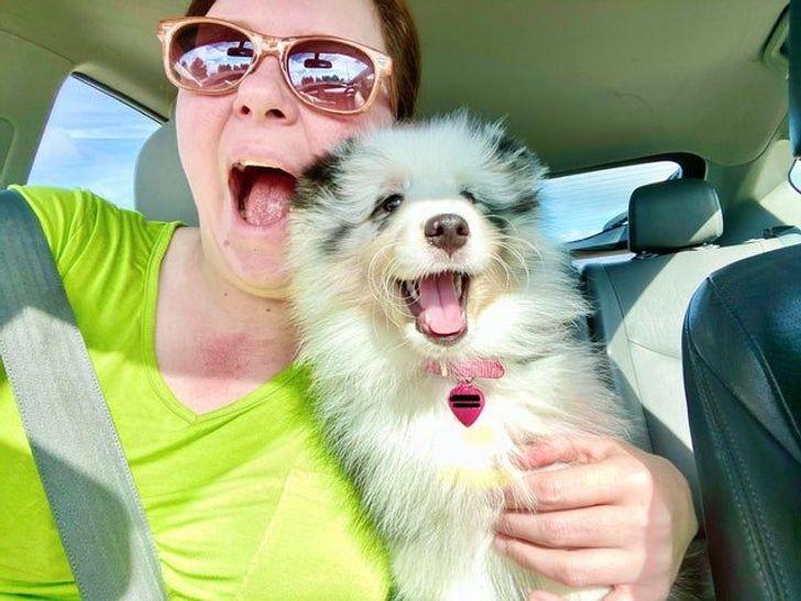boldog kutyák