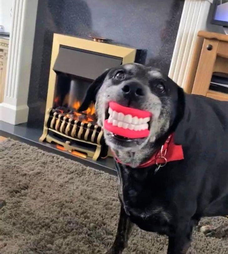 bolondos kutyák