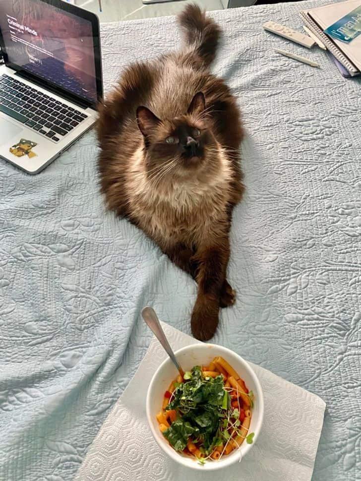 egy macska befogaddásával örökre megváltozik az életed