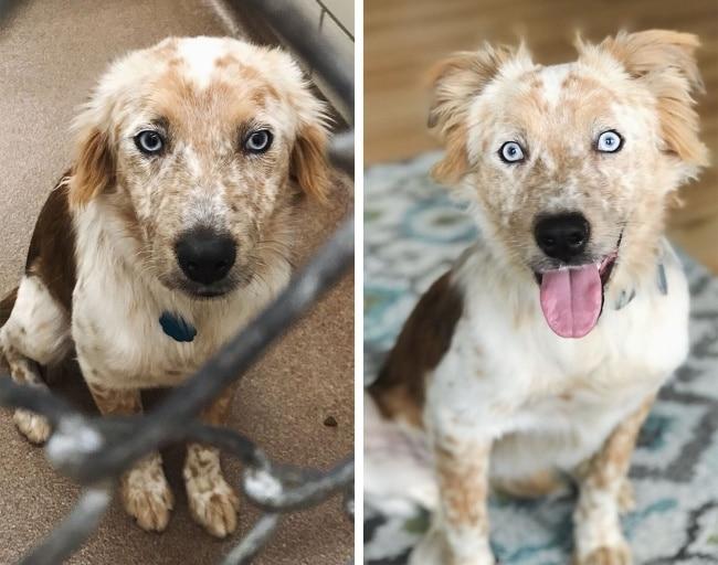előtte-utána fotó megmentett kutyákról