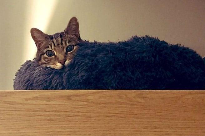 gazfickó macskák