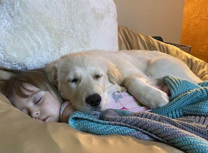 gyerekek és az állatok közötti kapcsolat felbecsülhetetlen