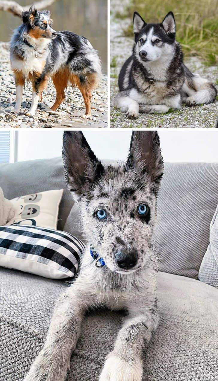 gyönyörű keverék kutyák