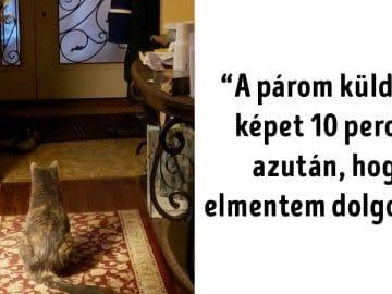 hűséges macskák