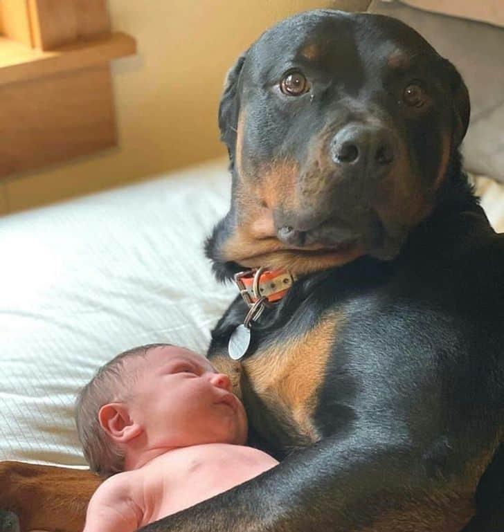 igaz barátság ember és állat közt