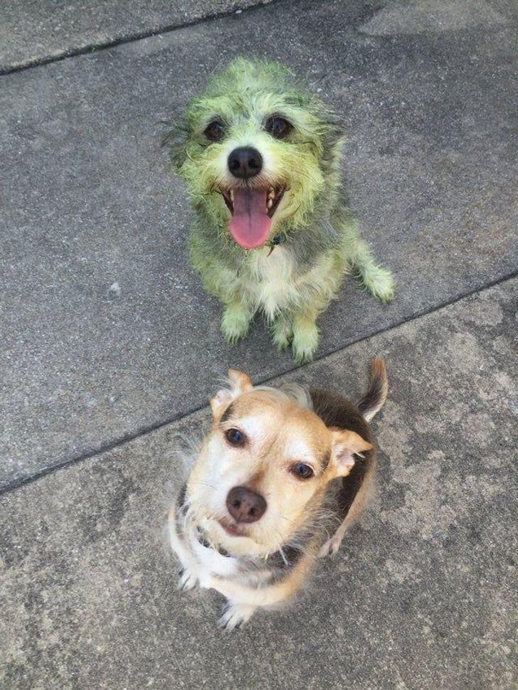 jó kutyák