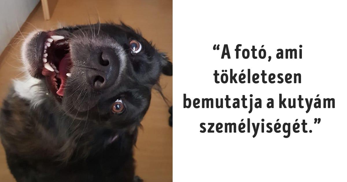 kutya és macska nem tud normálisan viselkedni