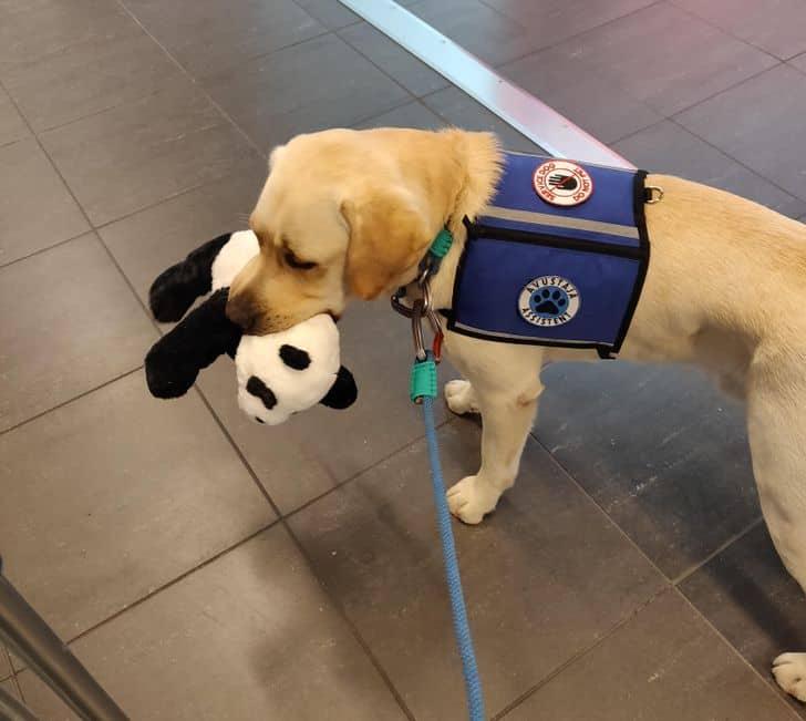 kutyák megérdemelnének egy kitüntetést