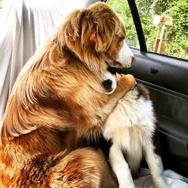 legádázabb kutyák is félnek olykor