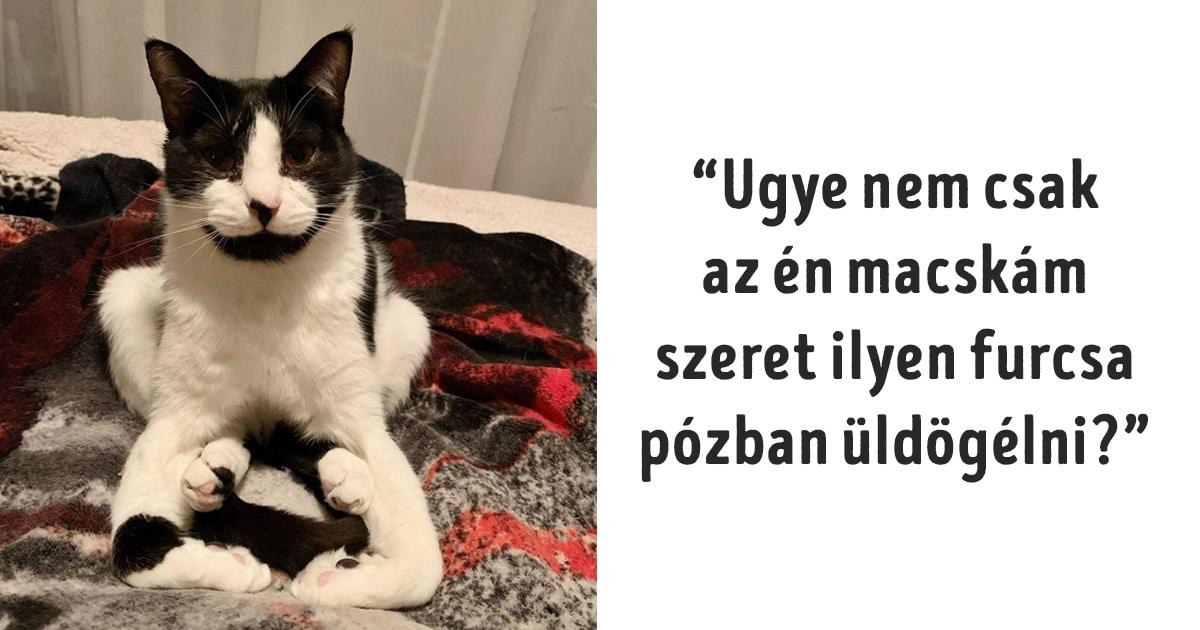 macskák szembe mennek a fizika törvényeivel