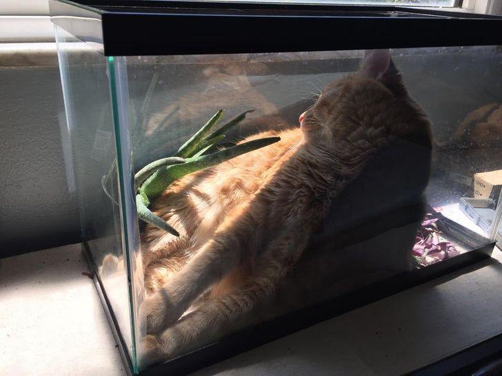 macskák fura módon aludnak