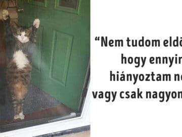 macskák viccesen viselkednek