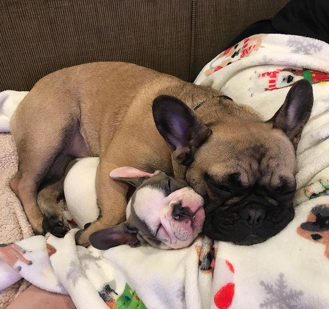 még mindig a testvérén alszik a kutyus