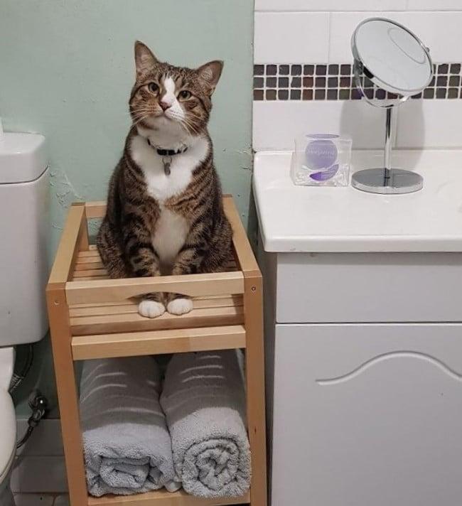 ragaszkodó macskák