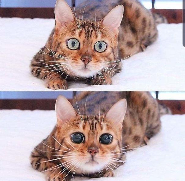 röhelyes macskák