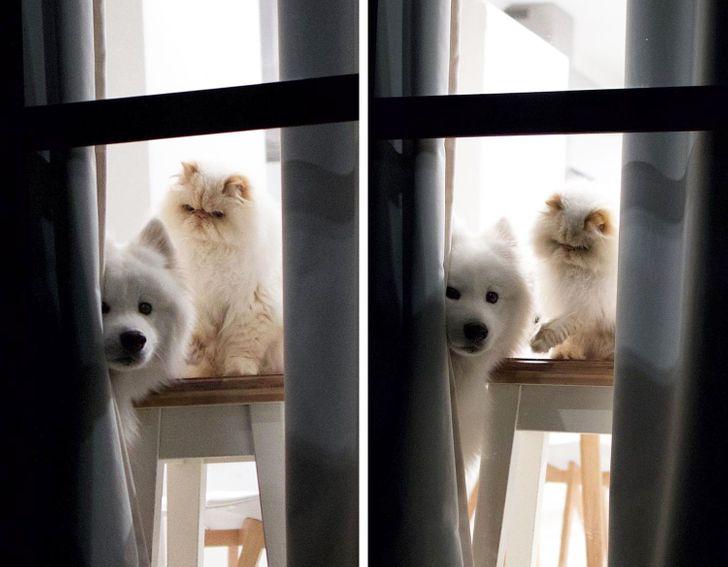 szokatlan barátság kutya és macska között