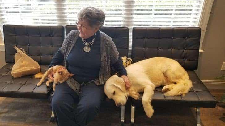 törődő kutyák