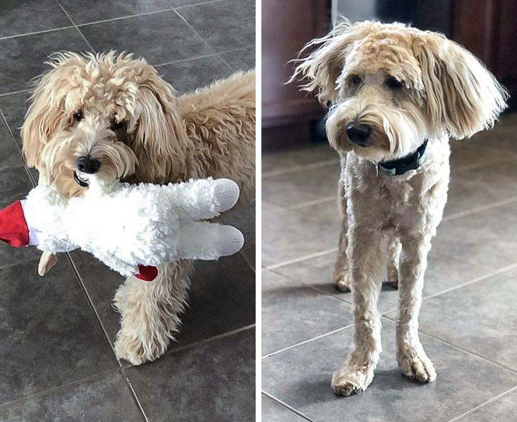 kutyák átvákutyák átváltoztak a kozmetikusnálltoztak a kozmetikusnál
