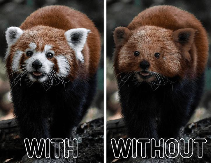 állatok jellegzetes bundával és nélküle