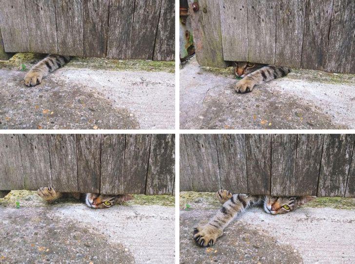 barátságos macskák