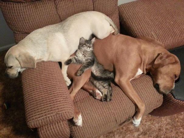 ilyen az élet sok állattal