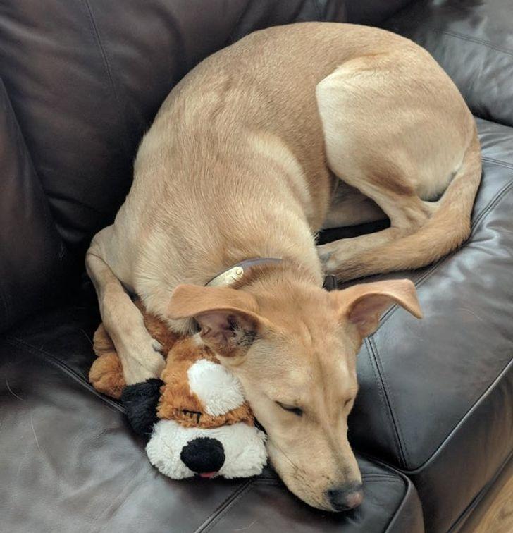 kutyák és kedvenc játékaik