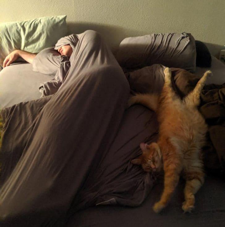 kutyák és macskák nem tudnak a gazdi nélkül aludni