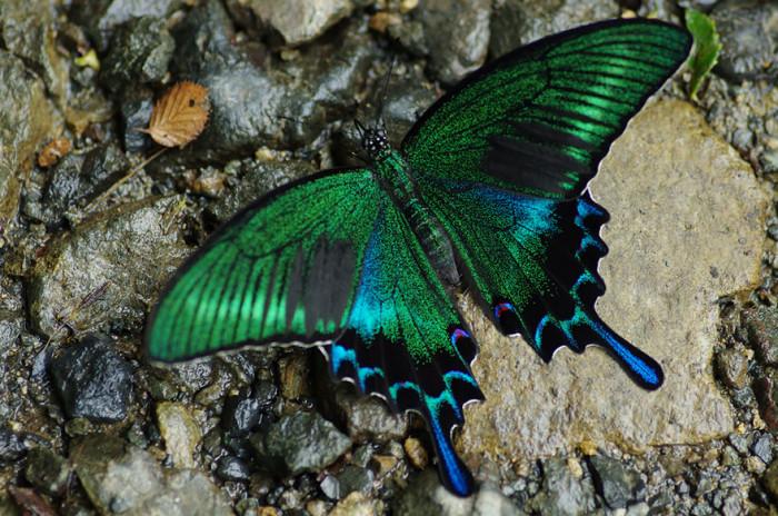 pillangók átváltozása