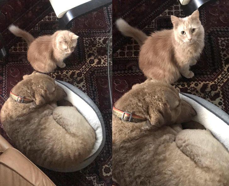 rosszcsont kutyák és macskák