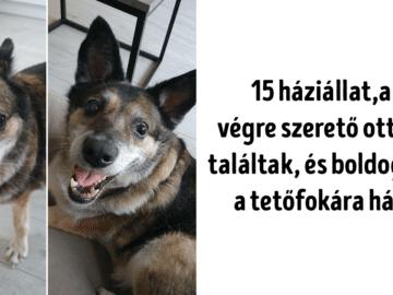 15 háziállat talált otthonra